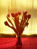 Purple tulip flower Stock Photos