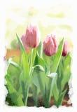 Purple tulip flower in garden, watercolor on canvas texture.  Stock Photo