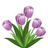 Purple tulip flowers decoration. Vector illustration eps 10 Stock Photos