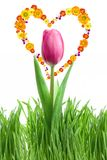 Purple tulip and green grass with heart from flowe Royalty Free Stock Photography