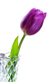 Purple Tulip in vase Royalty Free Stock Image