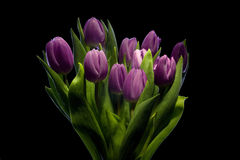 Purple tulips. Bunch of purple tulips, over black background, studio shot Royalty Free Stock Photos