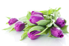 Purple tulips Stock Photos