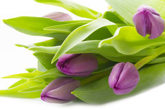 Purple tulips. Bunch of purple tulips isolated on white background Royalty Free Stock Images