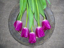 Purple tulips. Arranged on a copper tray Stock Photos
