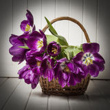 Purple tulips in a basket. Old  style Stock Photo