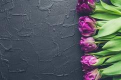 Purple tulips on black background Royalty Free Stock Image