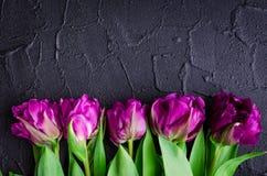 Purple tulips on black background Royalty Free Stock Photos
