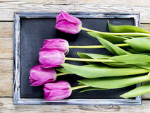Purple tulips. On the blackboard Royalty Free Stock Images
