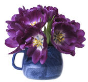 Purple tulips in a blue cup Stock Images