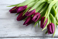 Purple tulips on the boards Royalty Free Stock Photo