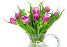 Purple tulips bouquet. Bouquet of purple tulips isolated on white background Stock Photo