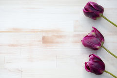 Purple tulips on bright wooden background Royalty Free Stock Photos