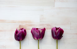 Purple tulips on bright wooden background Royalty Free Stock Photography