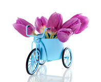 Purple tulips in a bycicle Royalty Free Stock Photography