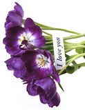 Purple tulips with card Royalty Free Stock Photo