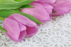 Purple tulips on a crochet tablecloth Stock Image