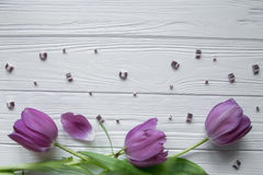Purple tulips with green leaves, purple stones. Space for text. Purple tulips with green leaves, purple stones Royalty Free Stock Photography
