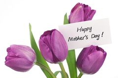 Purple tulips for mother Stock Photos