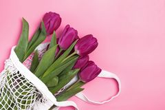 Purple tulips in a net bag on the pink background. Spring concept stock photos