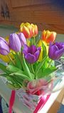 Purple Tulips. This photo shows some beautiful Tulips just opening their blooms Stock Images