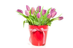 Purple tulips in a red vase Royalty Free Stock Images