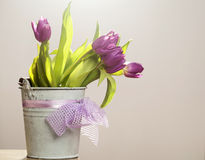 Purple tulips in retro bucket Royalty Free Stock Image