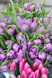 Tulips at market Stock Images