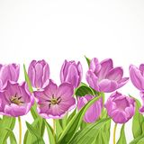 Purple tulips seamless background Stock Photo