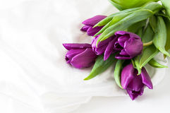 Purple tulips on silk. A bunch of purple tulips on white silk Stock Image