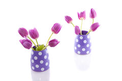 Purple tulips in vases Royalty Free Stock Photo