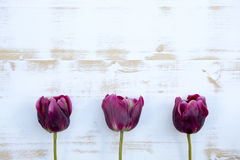 Purple tulips on white rustic wooden background Stock Photography