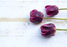 Purple tulips on white rustic wooden background Royalty Free Stock Images