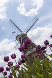 Purple tulips and windmill background Stock Images