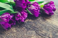 Purple tulips on wooden background. Purple ultraviolet tulips on old rustic wooden background. Valentines, Mothers, Womens Day and greeting concept. Banner Stock Images