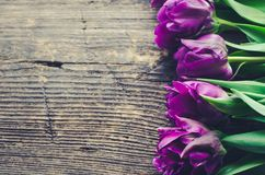 Purple tulips on wooden background. Purple ultraviolet tulips on old rustic wooden background. Valentines, Mothers, Womens Day and greeting concept. Banner Royalty Free Stock Photos