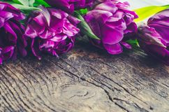 Purple tulips on wooden background. Purple ultraviolet tulips on old rustic wooden background. Valentines, Mothers, Womens Day and greeting concept. Banner Stock Photography