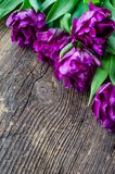 Purple tulips on wooden background. Purple ultraviolet tulips on old rustic wooden background. Valentines, Mothers, Womens Day and greeting concept. Banner Royalty Free Stock Images