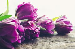 Purple tulips on wooden background. Purple ultraviolet tulips on old rustic wooden background. Valentines, Mothers, Womens Day and greeting concept. Banner Royalty Free Stock Photography