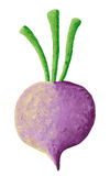 Purple turnip Stock Images