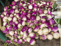 Purple Turnip Stock Photography