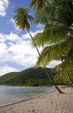 Purple Turtle Beach, Dominica. Purple Turtle Beach on the Caribbean island of Dominica, with palm trees, a bright blue sky, and turquoise water Stock Photography