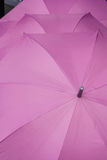 Purple umbrellas Stock Image