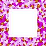 Purple Vanda Miss Joaquim Orchid Banner Card Border. Singapore National Flower. Vector Illustration.  vector illustration