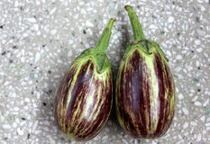 Purple variegated brinjal. Solanum melongena, hybrid cultivar with purple fruits variegated with yellowish-white, oblong up to 10 cm long fruits Grown as royalty free stock photos