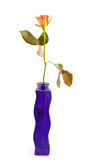 Purple vase with one rose Stock Image