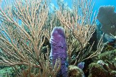 Purple Vase sponge Royalty Free Stock Photo