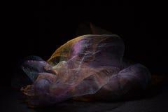 Purple veil Stock Photography