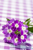 Purple verbena flower Royalty Free Stock Photography