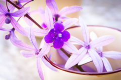 Purple vine flowers Royalty Free Stock Photography